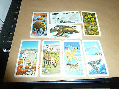 A2-CANADIAN BROOKE BOND-RED ROSE TEA CARDS 1973 -- THE ARTIC SERIES-16