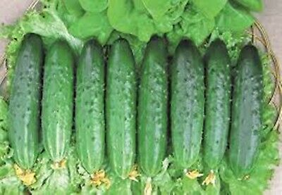 Seeds Cucumber Aprelskiy  F1 Early Self-Pollinating Variety
