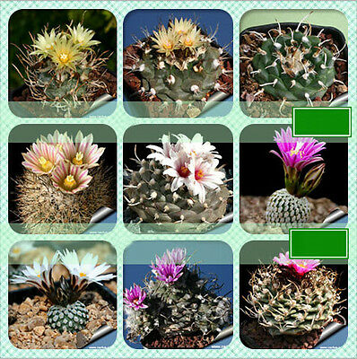 10Pcs Mixed Colorful Cactus Succulent Home Garden Potting Decoration Plant Seeds