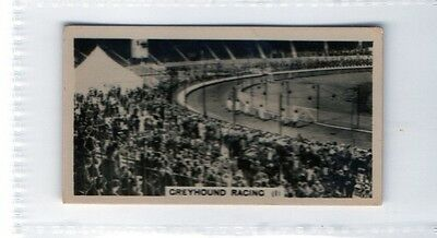 #9 Greyhound racing #1 -  1932 Cig card