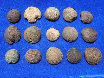 Florida Fossil Fossils 15 Echinoids Sea Biscuits Sea Urchins