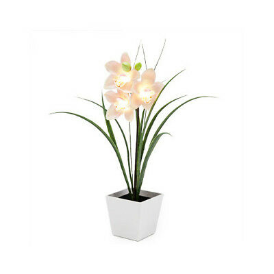 Energy Saving LED Lights Boat Pink Orchid Collection Blossom Flowers Innovative
