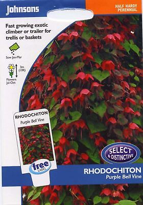 Johnsons - Pictorial Pack - Flower - Rhodochiton Purple Bell Vine - 15 Seeds