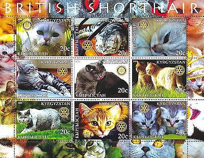 (017571) Cats, Rotary, Kyrgyzstan - private issue -