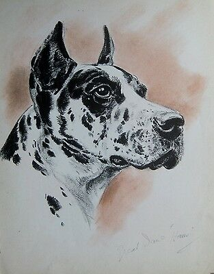 1944 Vintage GREAT DANE Dog Print Gallery Wall Art Artist Sketch DTP 883