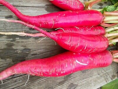 Seeds Radish Krasnyy Velikan Red Giant Organically Grown Russian Heirloom