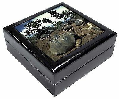 Galapagos Tortoise Picture Jewellery Box Christmas Gift, AR-T11JB