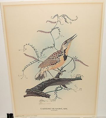 "R.l.conner ""Eastern Meadowlark"" Hand Signed Bird Lithograph 1975"
