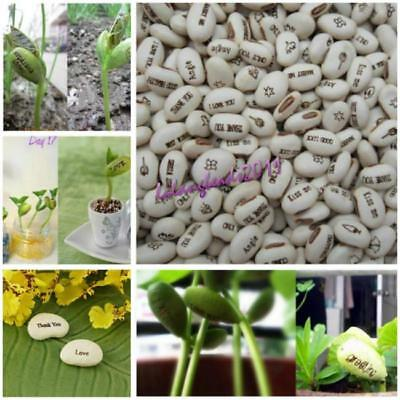 20pcs New Home Desk White Magic Bean Seeds Plant Growing Message Word Gifts LA
