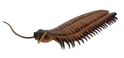 Anthropleura Centipede Giant Bug Display Prop