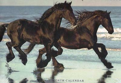12 Craft Photo Images HORSES by Mark Barrett 11x24 inch SEALED Majestic