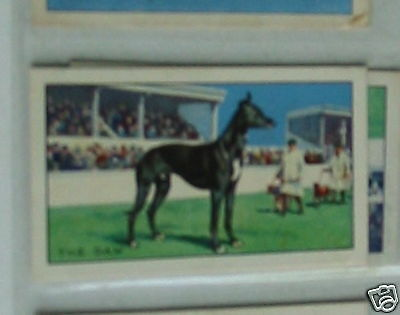 #18 The Daw Greyhound racing  - Sport cigarette card