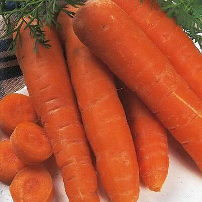 Kings Seeds - Carrot Autumn King - 2000 Seeds