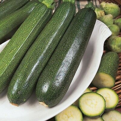 Kings Seeds - Courgette All Green Bush - 25 Seeds