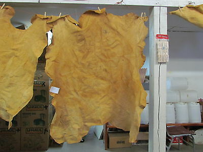 "Native American Light Color Home Tanned Moose Hide 43"" By 55"" Irregular Shaped"