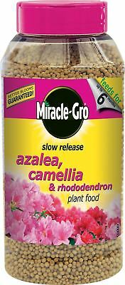 Miracle-Gro 1kg Slow Release Azalea Camellia & Rhododendron Plant Food Shaker