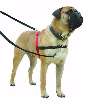 HALTI Harness - Harnais Pour Chien Formation-Taille Grand-The Company Of Animals