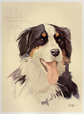 Vintage BERNESE MOUNTAIN Dog Print Dog Gallery Wall Art Dog Art 1401