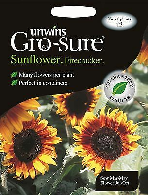 Unwins Pictorial Packet - Flower - Sunflower Firecracker F1 - 12 Seeds