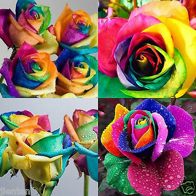 50 Seeds Charming Rare Colorful Seeds Rainbow Rose Valentine Lover Flower
