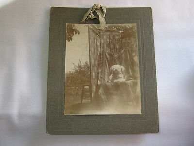 Antique Original Photograph w/ Cute Dog on chair outside  T*
