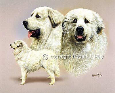 Pyrenean Mountain Dog Print by Robert J. May