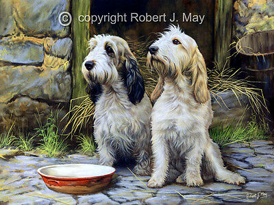 Basset Griffon Vendeen Ltd. Edition Print by Robert May