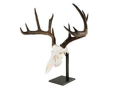 Braba Brand Deer Antler Skull Exquisite Mounting Solution - Table Stand - 7 Lbs