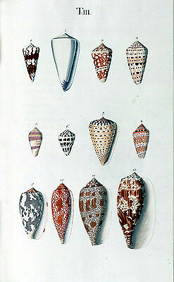18th Century Natural History Print of Seashells #9