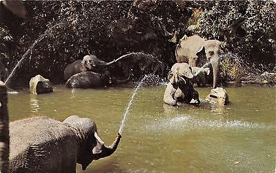 Disneyland Elephant Pool 01110423 / 0918 Chrome Postcard