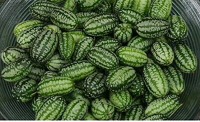 Vegetable - Cucamelon - 60 Seeds