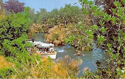 Disneyland Jungle Cruise Chrome Postcard