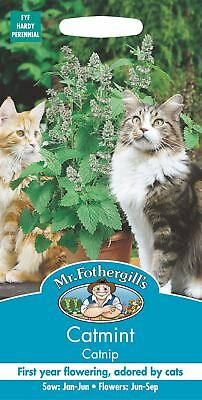 Mr Fothergills - Pictorial Packet - Herb - Nepata Catmint Catnip - 250 Seeds