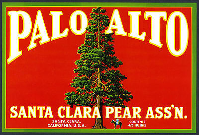 PALO ALTO~UNIV. STANFORD TREE~ORIGINAL 1930s SANTA CLARA PEAR FRUIT CRATE LABEL