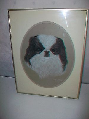 Framed Picture of Japanese Chin Dog by Mary Anne Pekingese