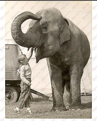 1960 CIRCUS The daughter of Gosta KRUSE with an elephant *Photo 14x18 cm