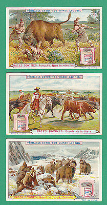 Liebig - Rare Set Of 6 Cards -  S 503  /  F 531  -  Types  Of  Cattle  -  1897