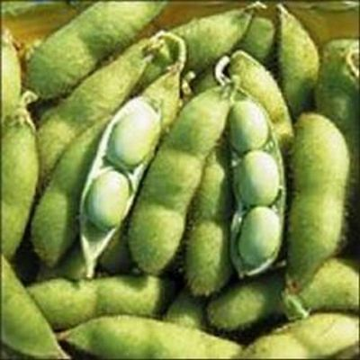Kings Seeds - Oriental Seeds - Soy Bean, Butterbean - 100 Seeds