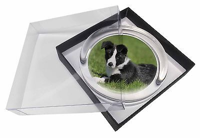 Border Collie Dog Glass Paperweight in Gift Box Christmas Present, AD-BC14PW