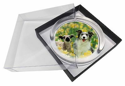 Border Collie Dog and Lamb Glass Paperweight in Gift Box Christmas Pre, AD-BC1PW