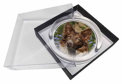 Red Border Collie Dog Glass Paperweight in Gift Box Christmas Present, AD-BC20PW