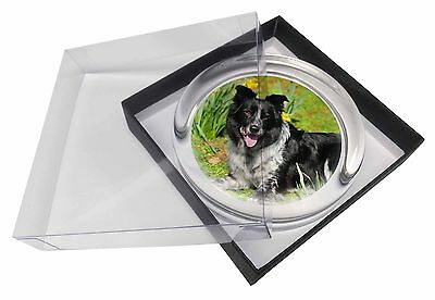 Border Collie Dog Glass Paperweight in Gift Box Christmas Present, AD-BC37PW