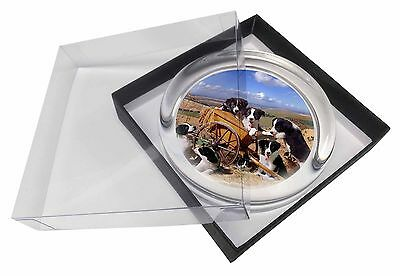 Border Collie in Wheelbarrow Glass Paperweight in Gift Box Christmas P, AD-BC3PW