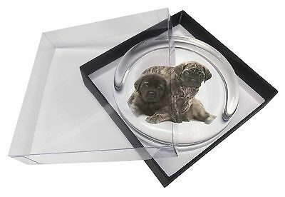 Bullmastiff Dog Puppies Glass Paperweight in Gift Box Christmas Prese, AD-BMT2PW