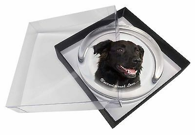 Black Border Collie With Love Glass Paperweight in Gift Box Christmas, AD-CB1uPW