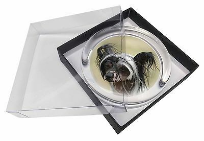 Chinese Crested Dog Glass Paperweight in Gift Box Christmas Present, AD-CHC2PW