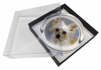 Chinese Crested Powder Puff Dog Glass Paperweight in Gift Box Christm, AD-CHC3PW