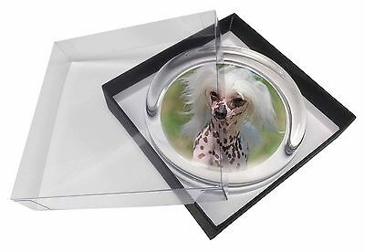 Chinese Crested Dog Glass Paperweight in Gift Box Christmas Present, AD-CHC4PW