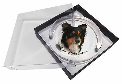"Tri-colour Border Collie Dog ""Yours Forever..."" Glass Paperweight in, AD-CO33yPW"