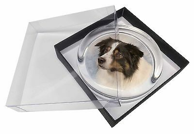 TriCol Border Collie Dog Glass Paperweight in Gift Box Christmas Prese, AD-CO5PW